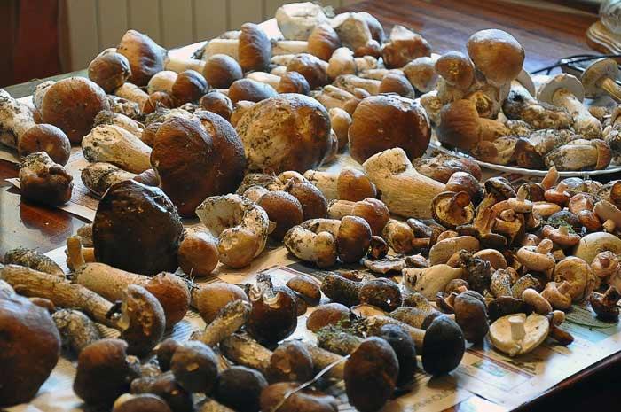 Соте из лесных грибов